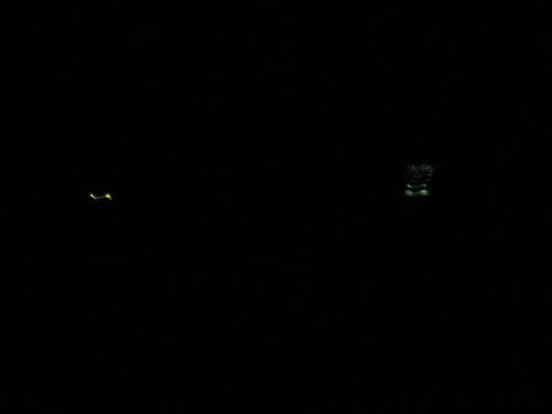 小幡緑地公園(名古屋市)でホタルを観てきました。