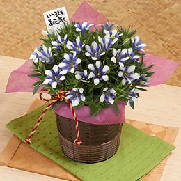 2012年9月17日は敬老の日 イイハナ「おじいちゃん・おばあちゃんに贈るギフト」売れ筋ランキング